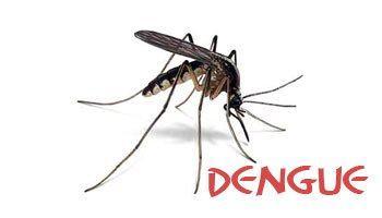 Phát minh mới: Loại muỗi có khả năng.... chống lại căn bệnh sốt xuất huyết