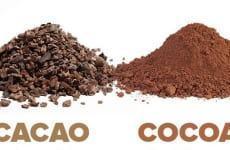 Cacao và cocoa khác nhau tới sức khỏe như thế nào?