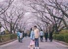 Nguyên nhân khiến chiều cao người Việt Nam thấp hơn Hàn Quốc, Nhật Bản