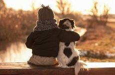Tại sao thú cưng không sống lâu như con người- Bài học về cách sống một cuộc đời tốt đẹp