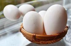 Trứng ngỗng thực sự có tốt cho bà bầu không?